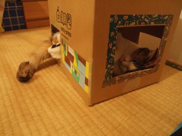 箱入り小梅の観察8