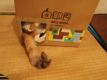箱入り小梅の観察7