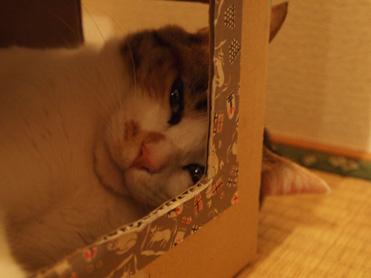箱入り小梅の観察5