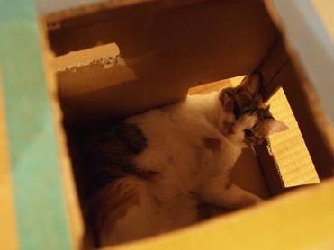 箱入り小梅の観察3