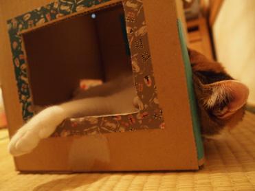 箱入り小梅の観察2