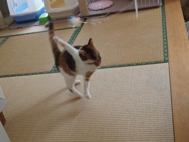 1202神奈川県民会21