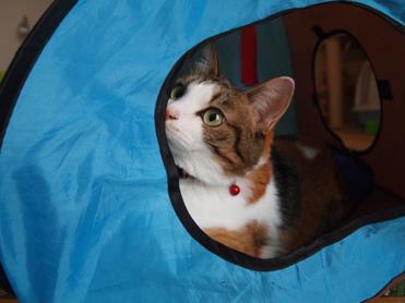 テント大好き1