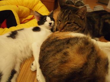 小梅たんにくっつく杏と李