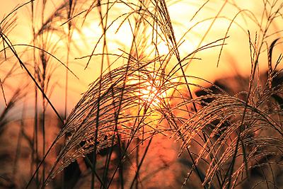 今日の夕焼け 20101002 01