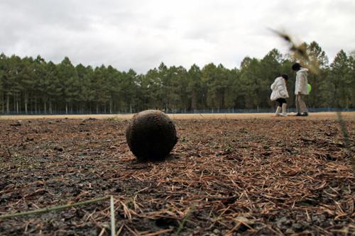 野球ボール 001