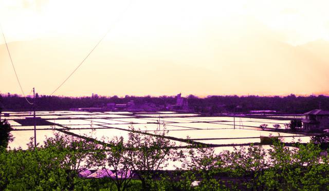 安曇野の水田