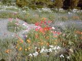 挙式の朝の花々