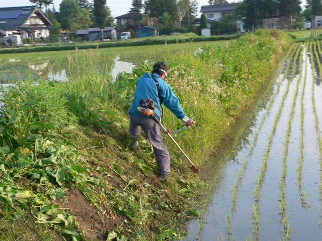 水際そっと草を刈る