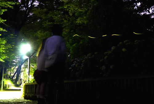 清瀬市せせらぎ公園のホタル