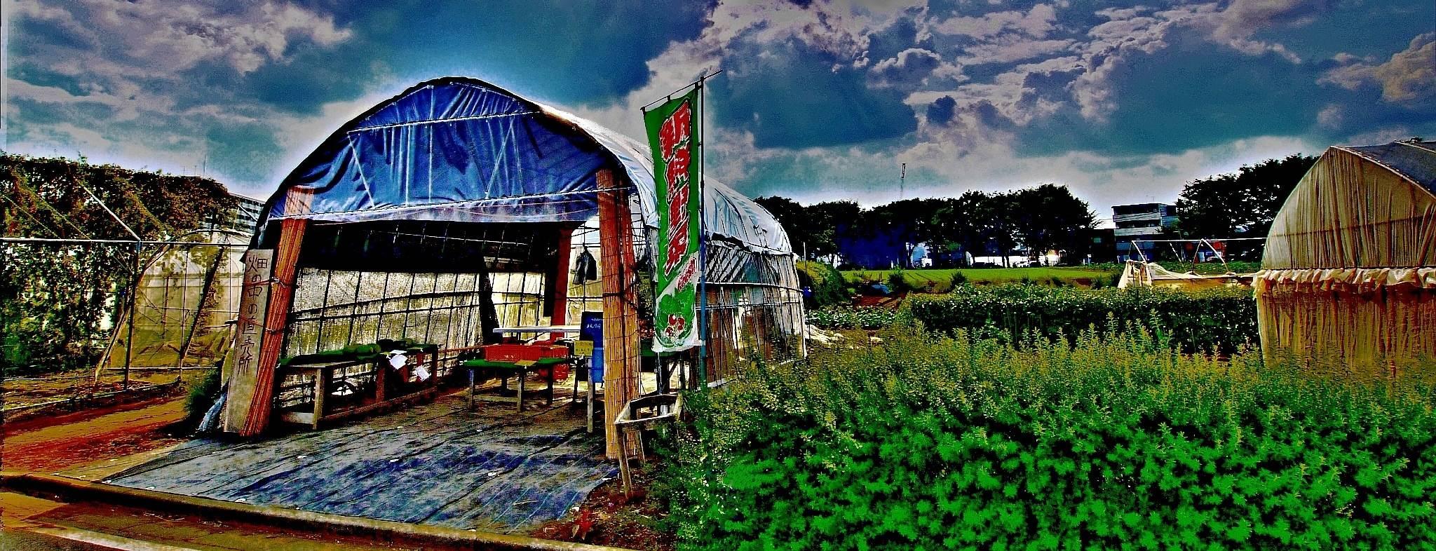 清瀬市上清戸の畑の農産物直売所