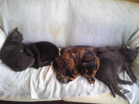 初猫団子1