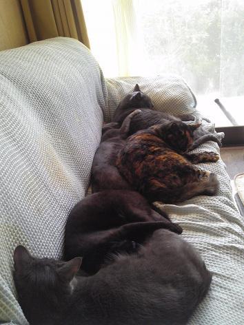 初猫団子2