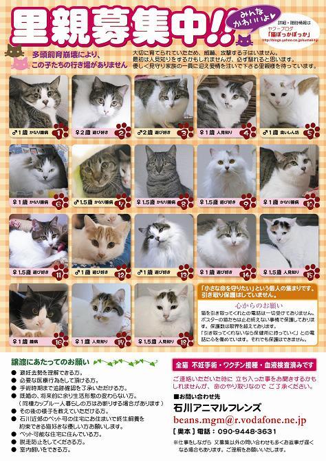 cats24_A3poster.jpg