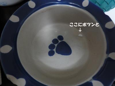 DSC06491_1.jpg