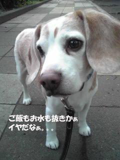 Image3161_1.jpg