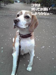 Image875_1.jpg