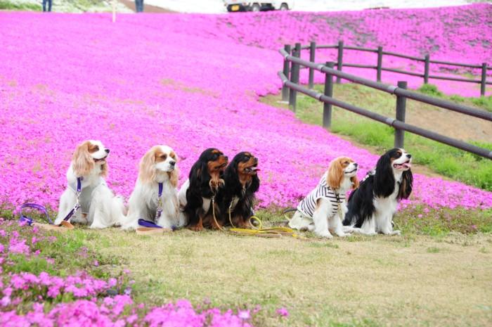 芝桜の前で、みんなで一緒に。。