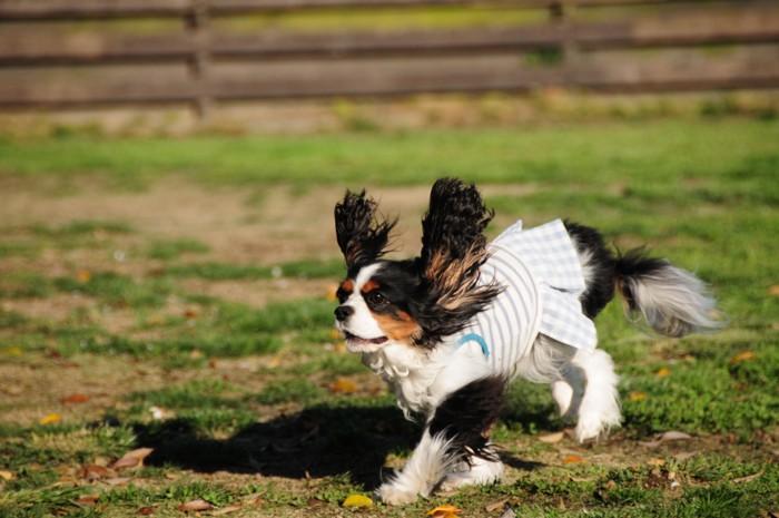 ウサギになって走る、ミーコちゃん。