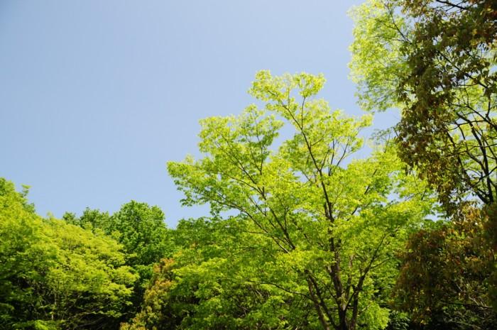 9362新緑~