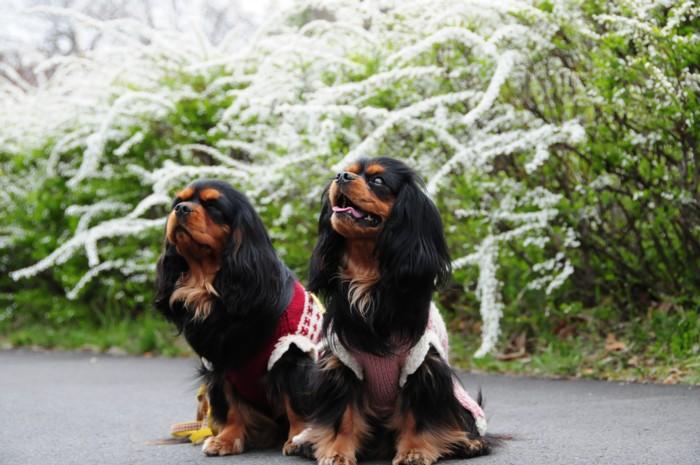 雪柳と奈々・芽衣