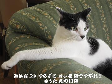 可愛いお邪魔ネコ 苦しゅうないポーズ