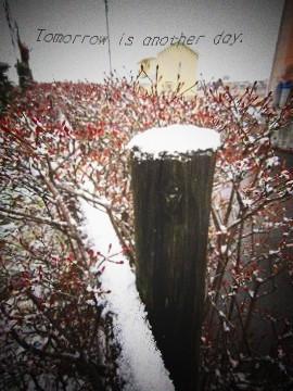 2010.12.15 雪景色