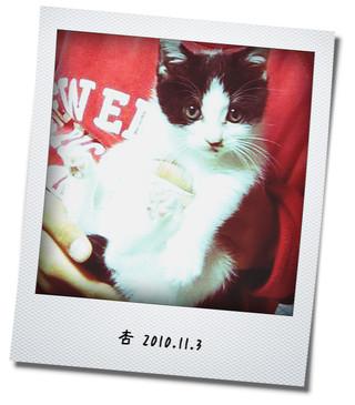 杏 2010.11.3