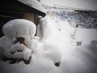 2011.2.1 冬景色