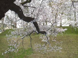 201204sannomaru2.jpg