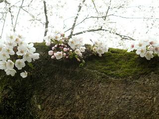 201204sannomaru3.jpg