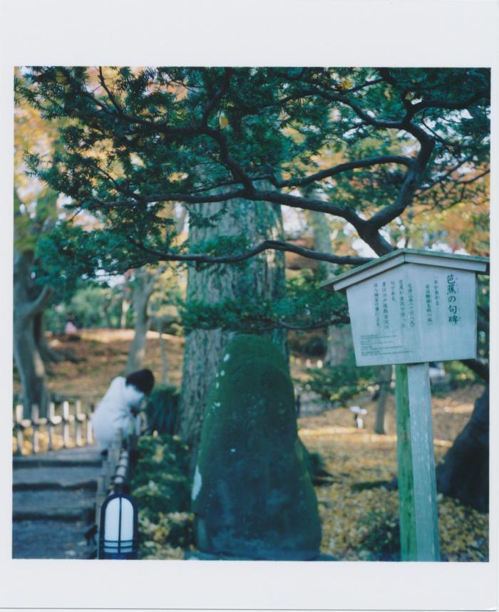 kenroku-en_芭蕉と松