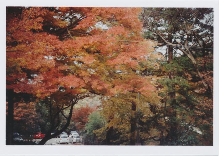 kenroku-en_紅葉01