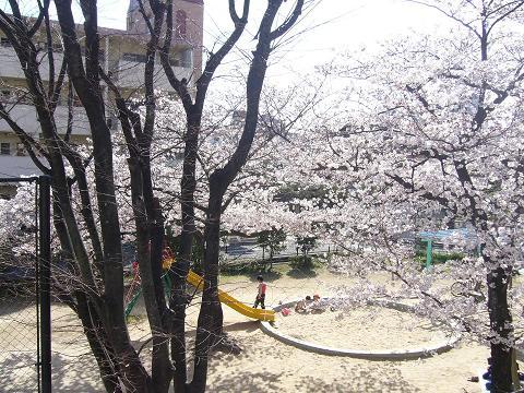 お花見 前の公園