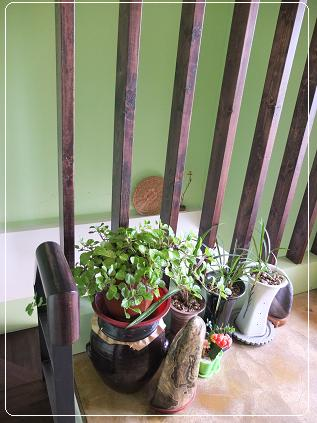 プクソリ 二階の緑