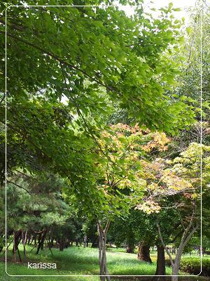 首露王陵 緑地帯