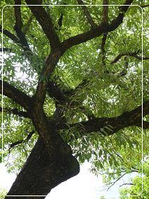 首露王陵 木々