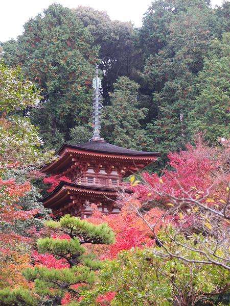2012-11-18 瑠璃寺