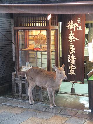 11-17 東大寺 参道の鹿