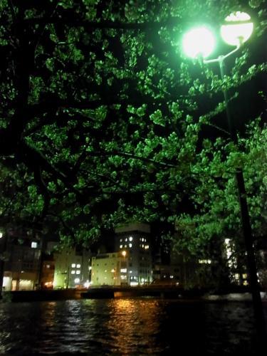 0403夜桜3