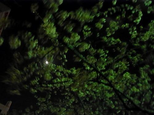 0403夜桜2