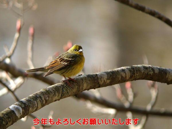 20120101 20110513-2 nojiko2_DSC02151