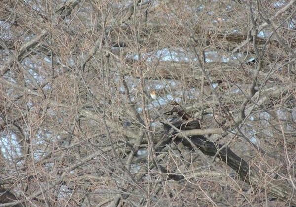 20130121 '13-01-17野山北