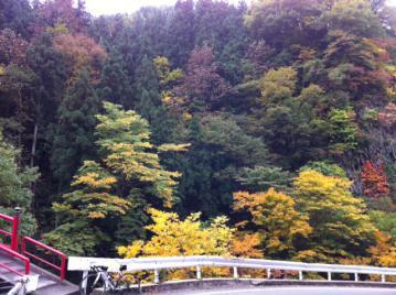 20121026CAAD10高社山紅葉