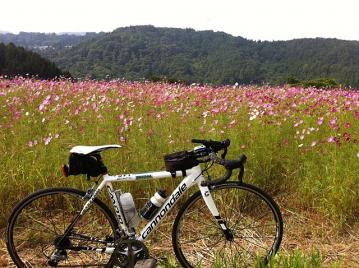20110910CAAD10栄村コスモス畑