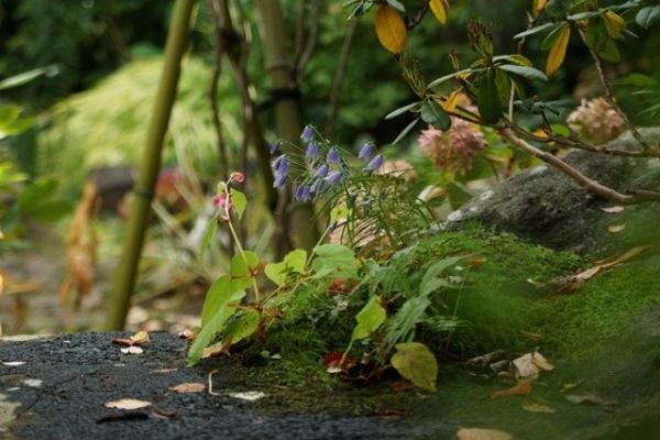 watermarked-DSC09748.jpg