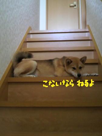 ichi-docomo-14.jpg