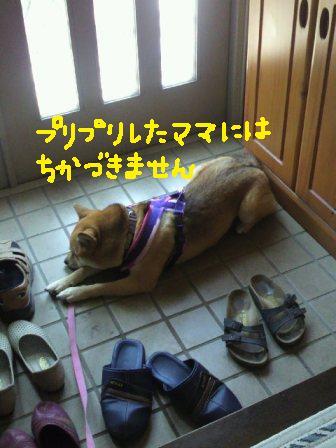 ichi-docomo-15.jpg