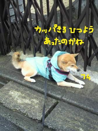 ichi-docomo-17.jpg