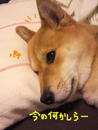 ichi-docomo-22.jpg